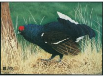 JVD - Blu-Grouse Animal Faces (10x pcs)